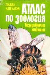 Атлас по зоология. Безгръбначни животни